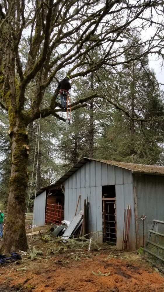 Tim's Tree Removal And Services: Creswell, OR