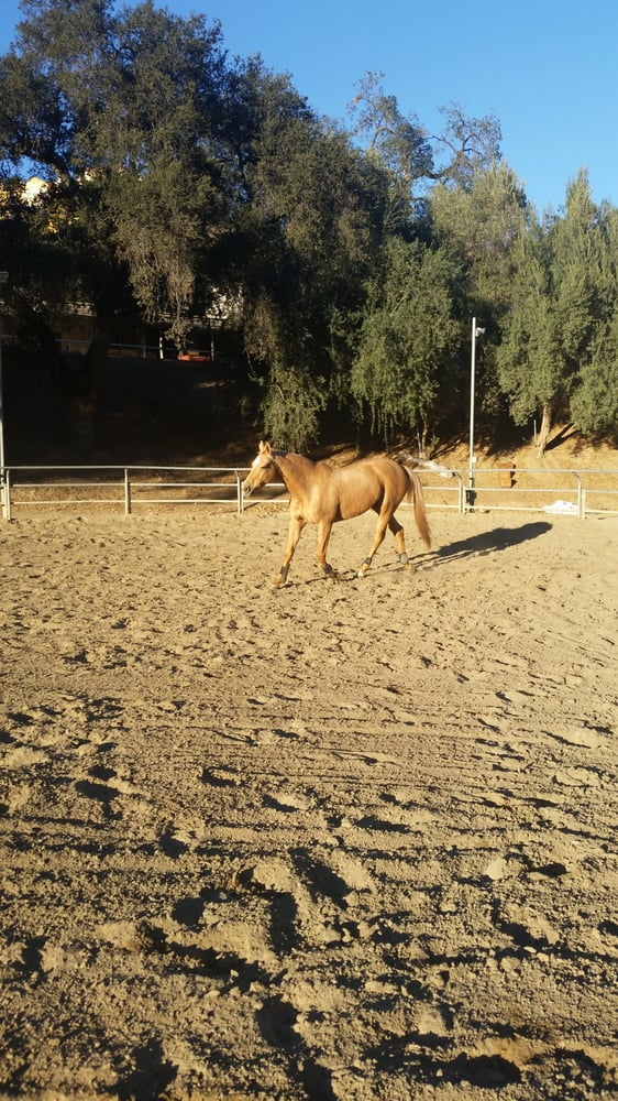 Bell Canyon Equestrian center: 29 Baymare Rd, Bell Canyon, CA