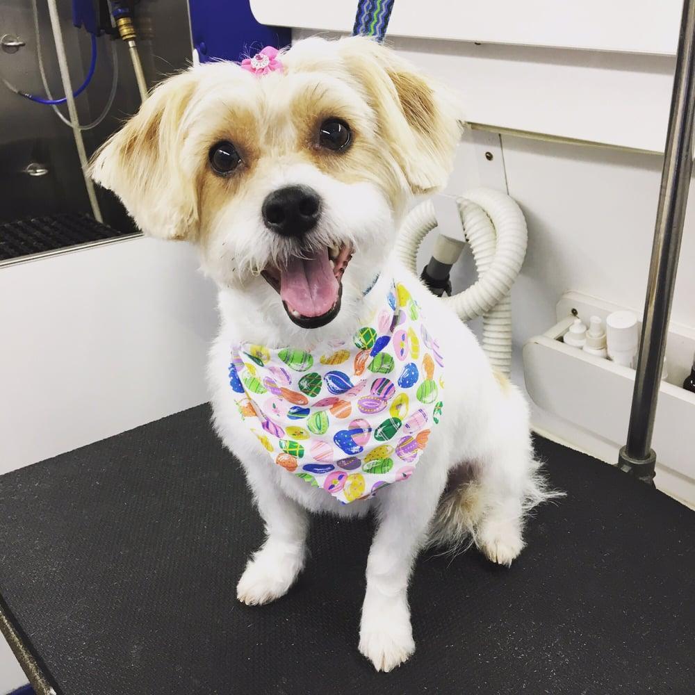 Katie's Mobile Pet Spaw: Herndon, VA