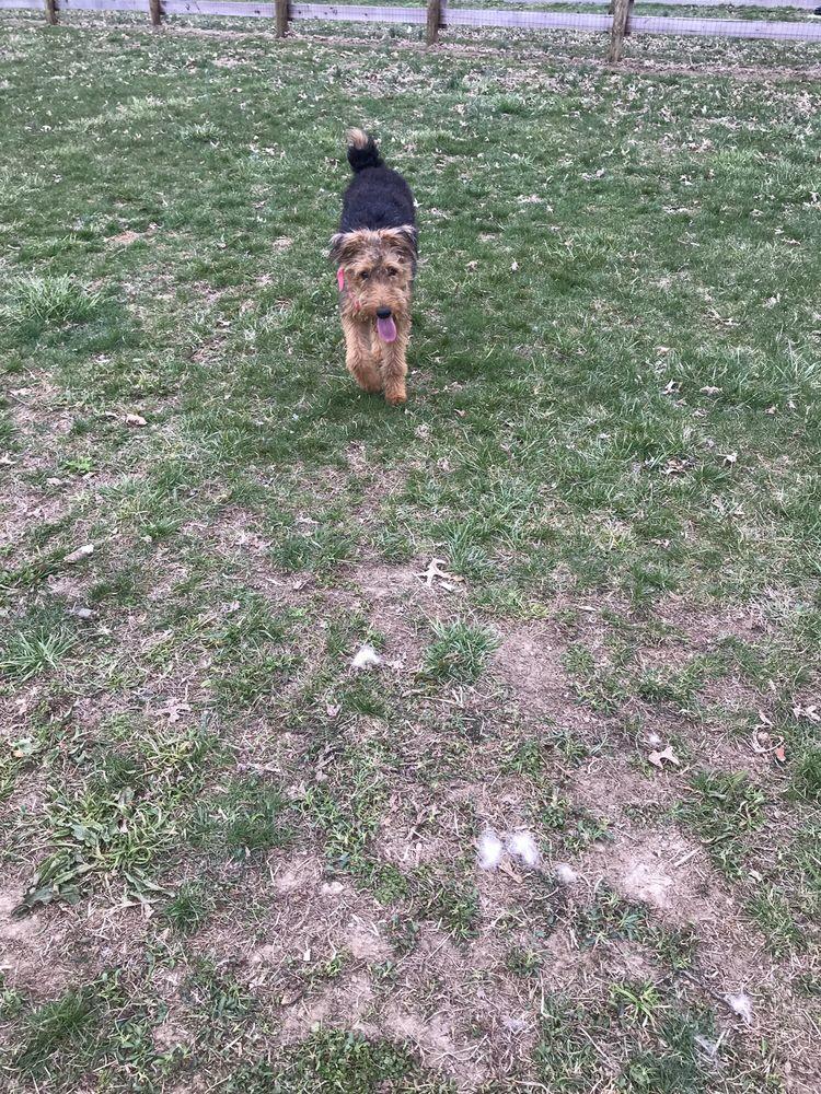 Flat Run Dog Park: 113 Reynolds Ave, Cynthiana, KY