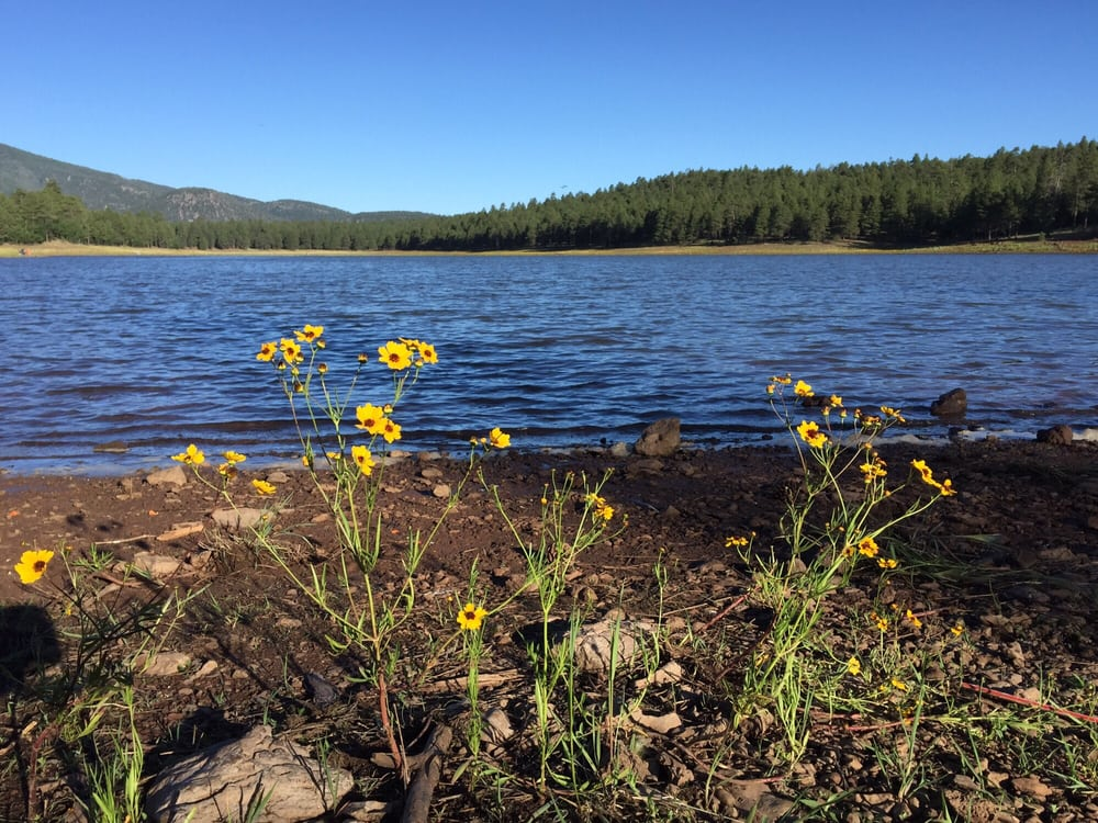 Dogtown lake campground 18 photos campgrounds 1250 s for Fishing in williams az