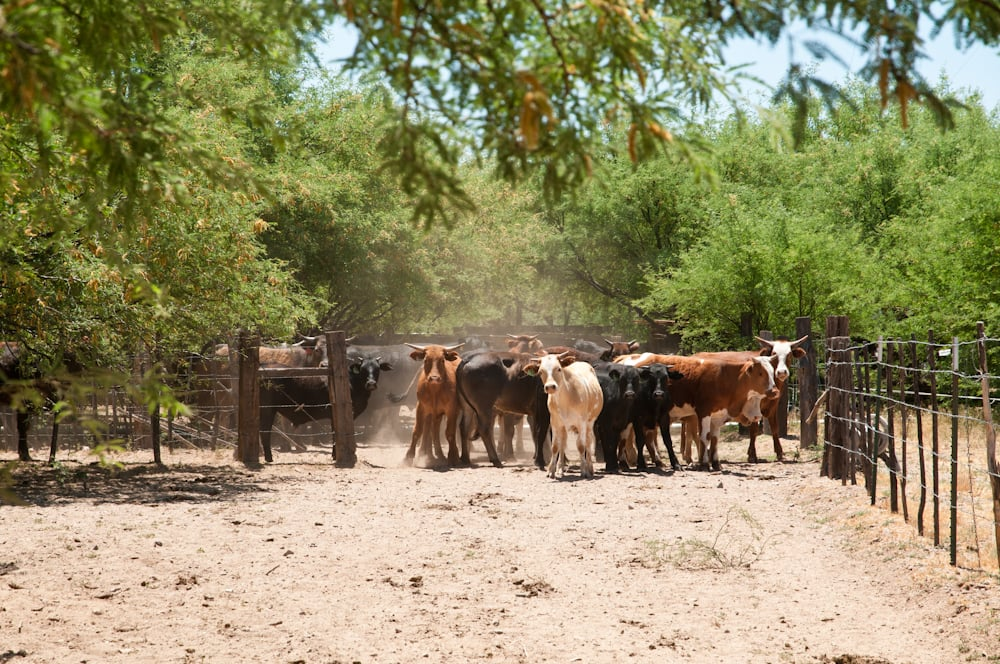 Double Check Ranch: 4965 N Camino Rio, Winkelman, AZ