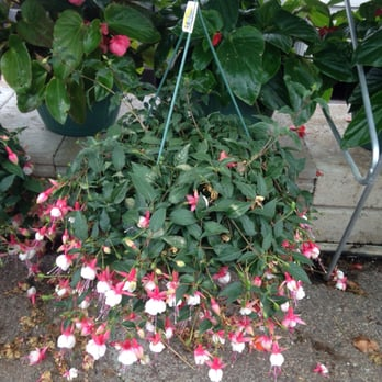 Fair Oaks Nursery and Garden Center - Nurseries & Gardening - 134 S ...