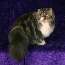 pusheen cat stuffed animal