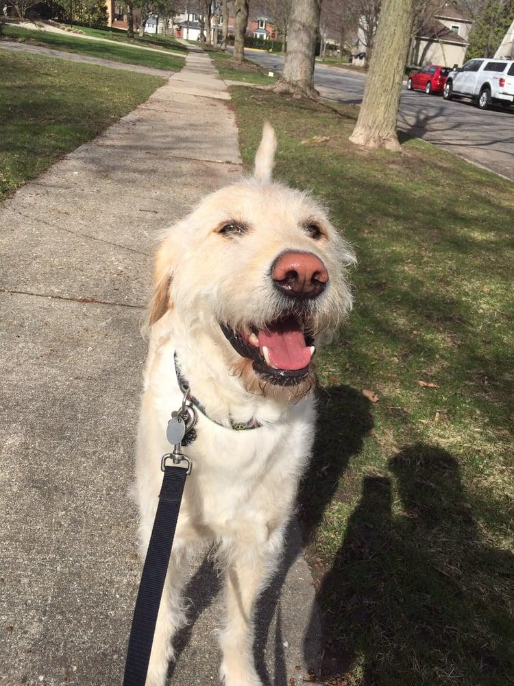 Four Paws Dog Walking and Pet Services: Algonac, MI