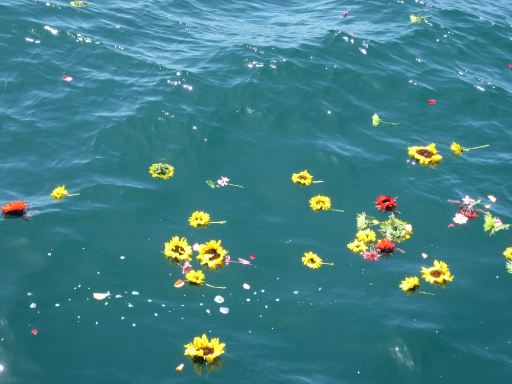 Flowers floating on the ocean yelp for Floating flowers in water