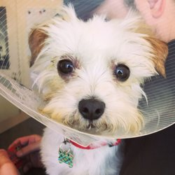 VCA East Bay Veterinary Emergency - 49 Photos & 137 Reviews