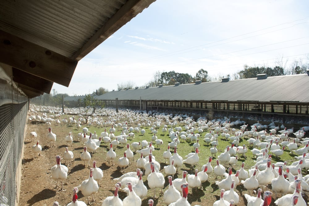 Photo of Jaindl Farms: Orefield, PA
