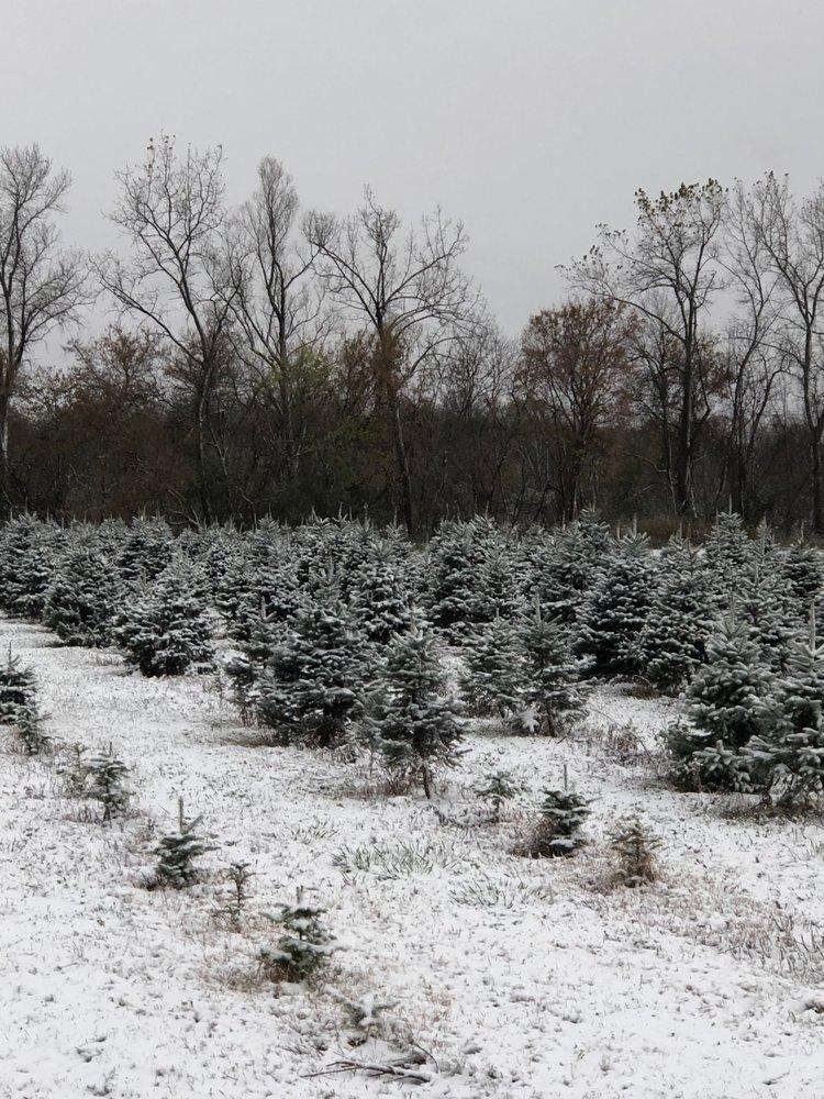 Bodine's Tree Farm: 4239 Kipp Rd, Canandaigua, NY