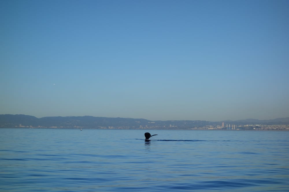Classy yelp for Marina del rey fishing report