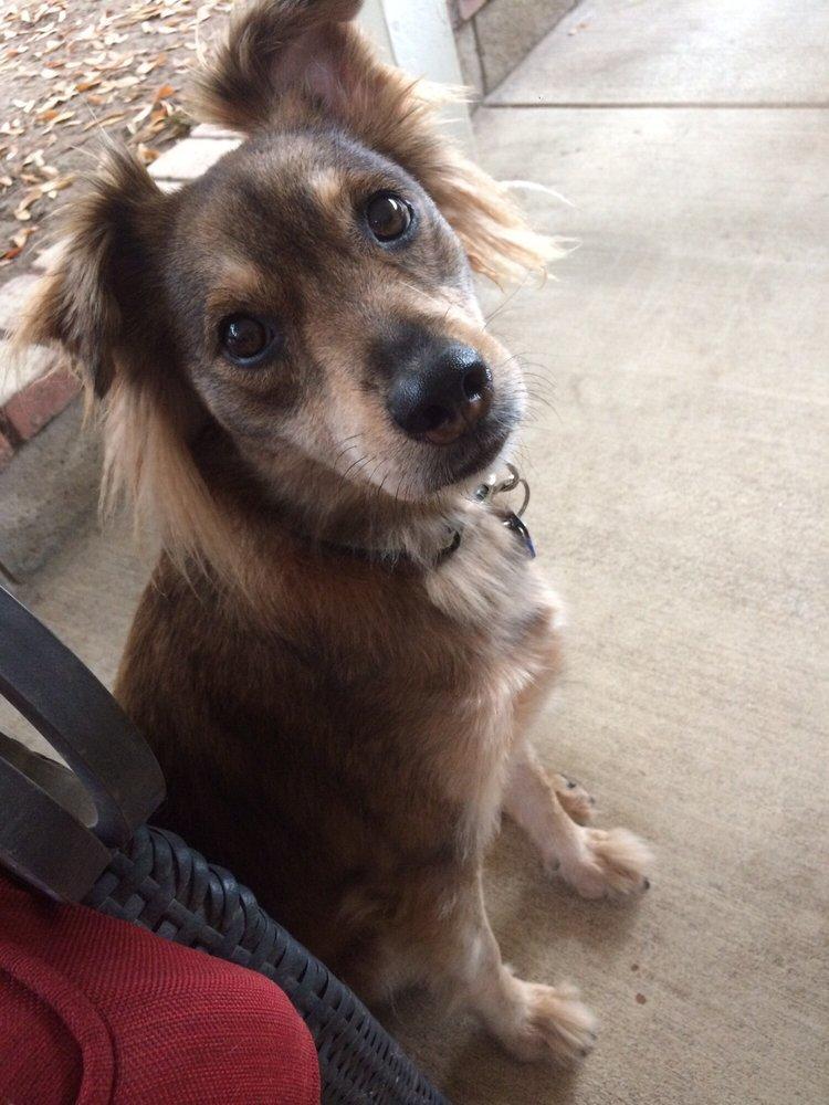 Woodside Animal Hospital: 12149 Woodside Ave, Lakeside, CA