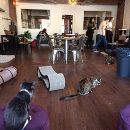 Restaurants Near Pounce Cat Cafe