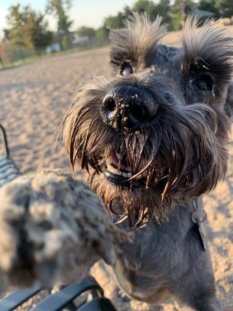 Berkeley Leashless Dog Park: 4800 Sheridan Blvd, Denver, CO