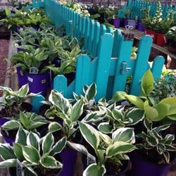 Photo Of Good Earth Garden Center   Colorado Springs, CO, United States.  Hostas