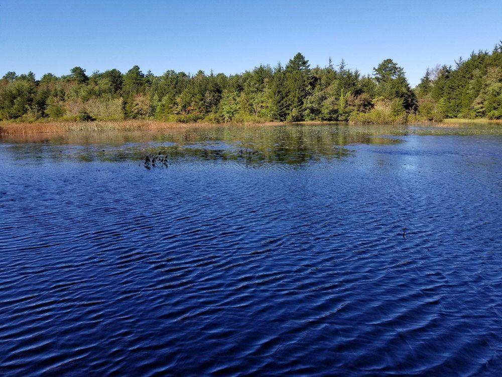Cranberry Bog County Park: Edwards Ave, South Riverhead, NY