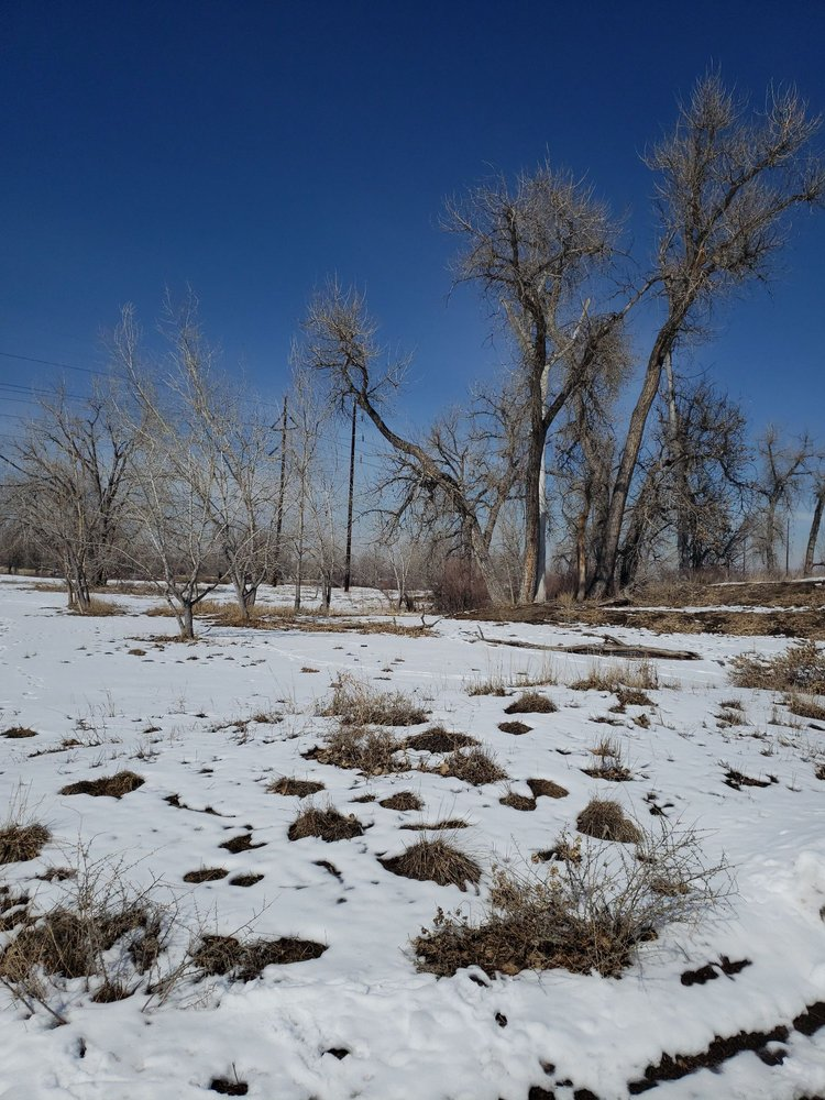 Carson Nature Center-South Platte Park: 3000 W Carson Dr, Littleton, CO