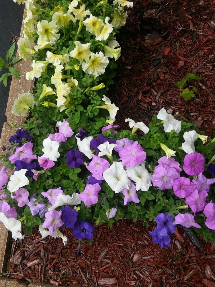 Petal Pushers Garden Center: 25601 S McKinley Woods Rd, Channahon, IL