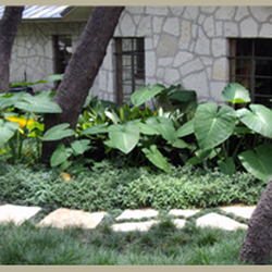 Photo Of Four Seasons Lawn Care   San Antonio, TX, United States