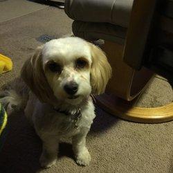 Best Dog Pet Grooming Pet Groomers 1317 Joshua St Parker Az