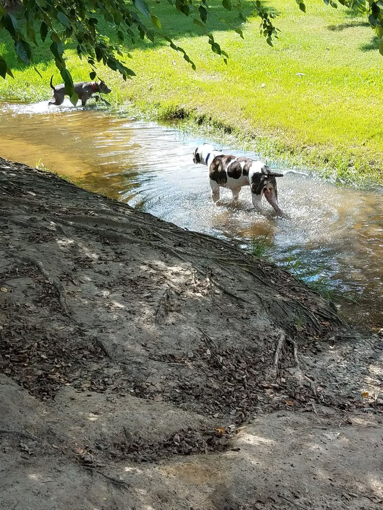 Social Spots from Macon Dog Park