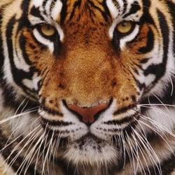 Photo Of Tiger Storages   Porter, TX, United States. Tiger Self Storage