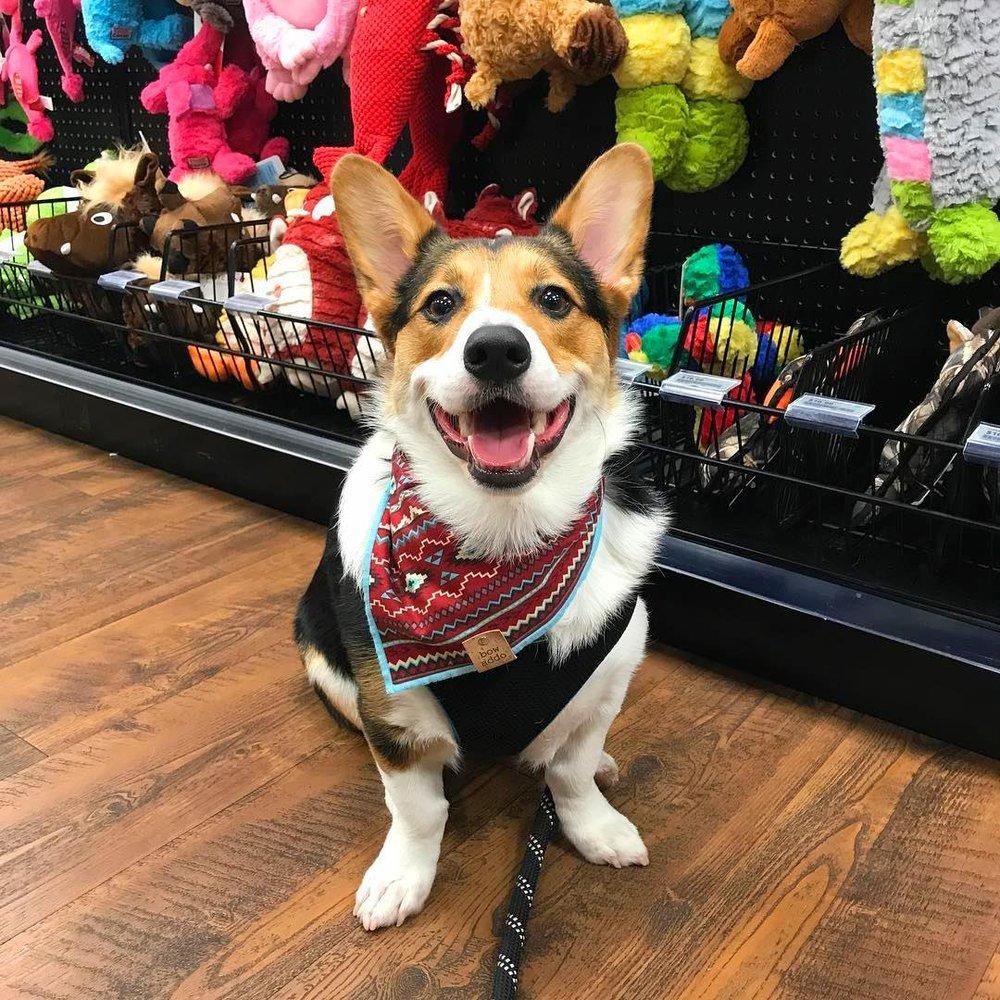 Kahoots Pet Store: 677 San Rodolfo Dr, Solana Beach, CA