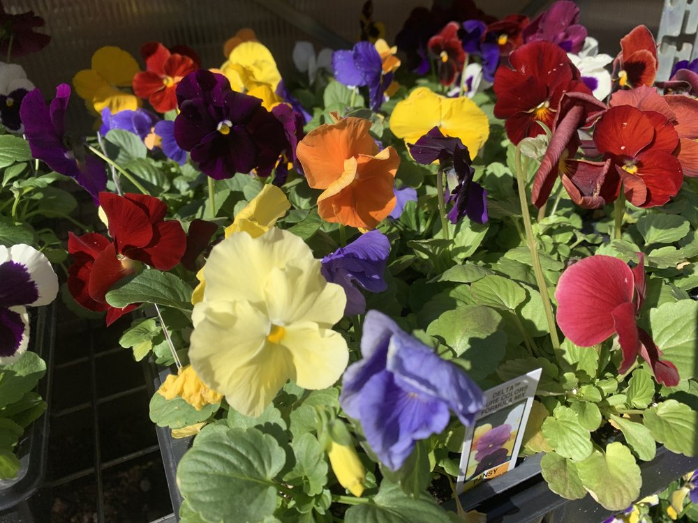 Anton's Greenhouses: 9140 Cooper Rd, Pleasant Prairie, WI