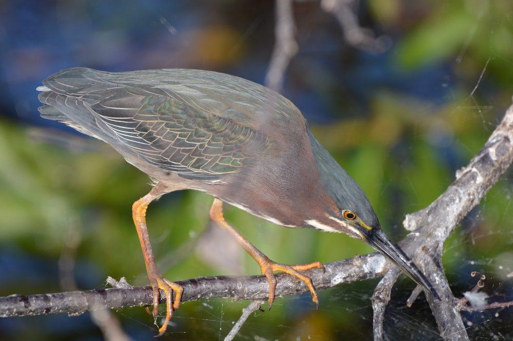 Wakodahatchee Wetlands: 13270 Jog Rd, Delray Beach, FL