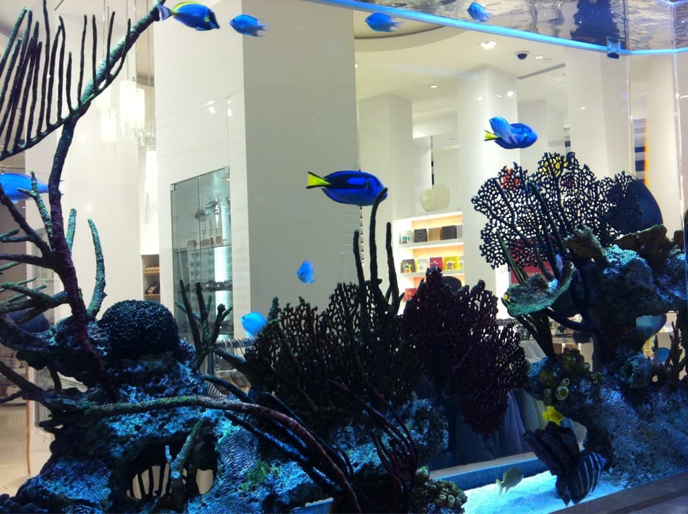 Pretty fish tank yelp for Fish tank cleaning service near me