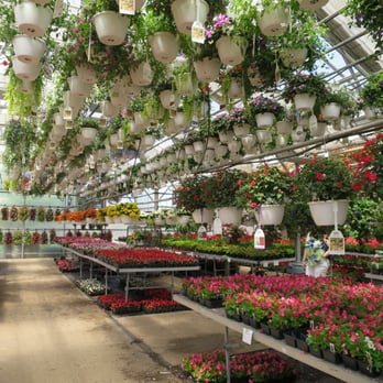 Photo Of Pesche S Flowers Des Plaines Il United States Fabulous Selections