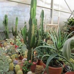 Fratelli ingegnoli vivai e giardinaggio via salomone for Ingegnoli piante