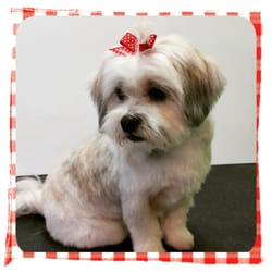 Dog Grooming Fairview