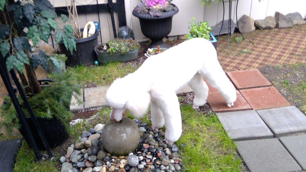 Canine Cottage: 435 S Lewis St, Monroe, WA