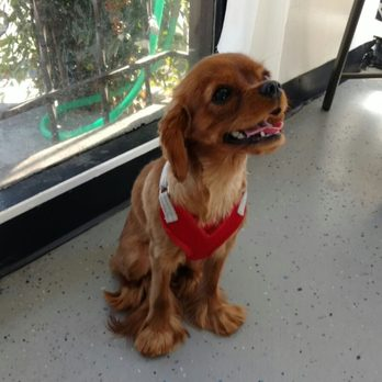 Alex the Happy Dog Grooming - 50 Photos & 158 Reviews ... - photo#27