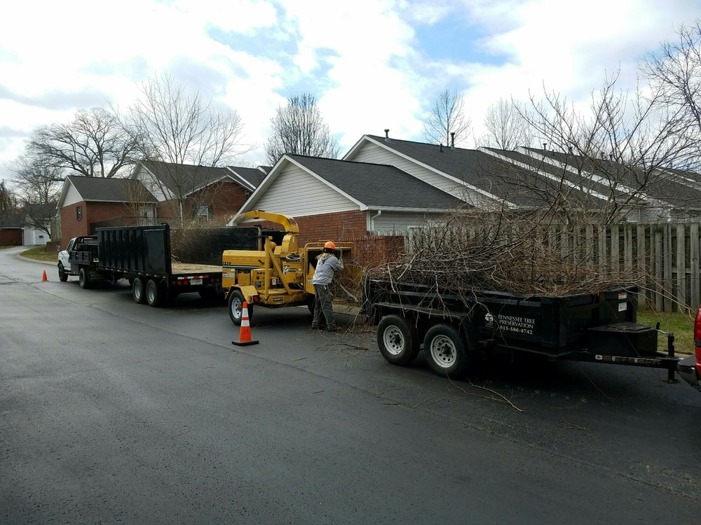TN Tree Preservation: College Grove, TN