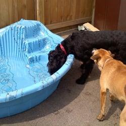 Boscos Playland Dog Daycare and Dog Boarding - CLOSED - Pet