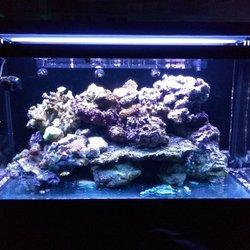 Photo Of C Sea Aquariums West Palm Beach Fl United States Redsea