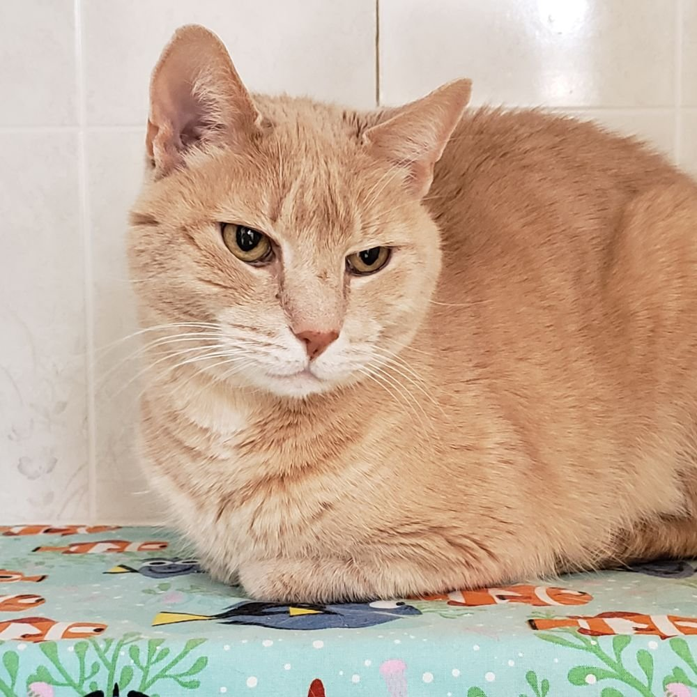 The Cat Chalet