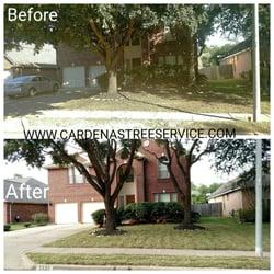 Cardenas Tree Service 34 Photos Tree Services 17311 Jui Ln
