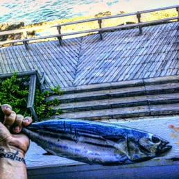 Maui sporting goods spearfishing specialties 24 reviews for Fishing supplies honolulu