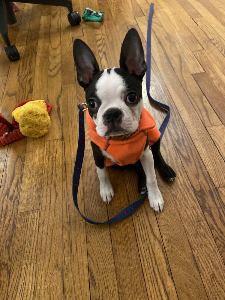 Zen Dog Training: Somerville, MA
