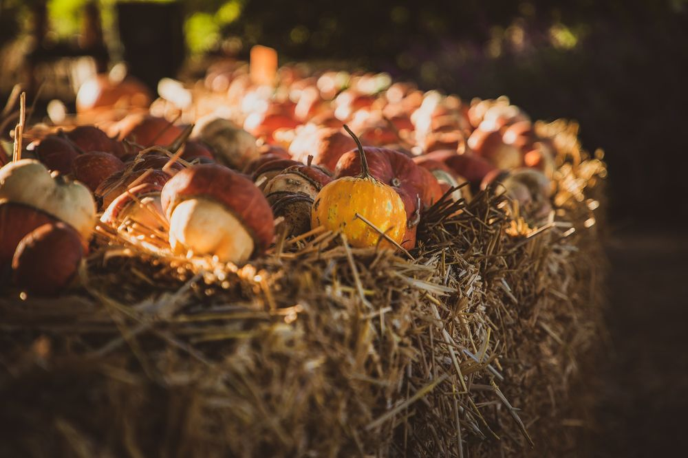 Lavender Hill Pumpkins