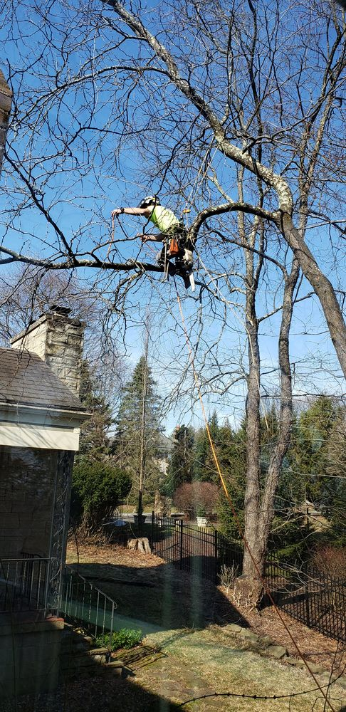Barlippi Tree Professionals: Saltsburg, PA