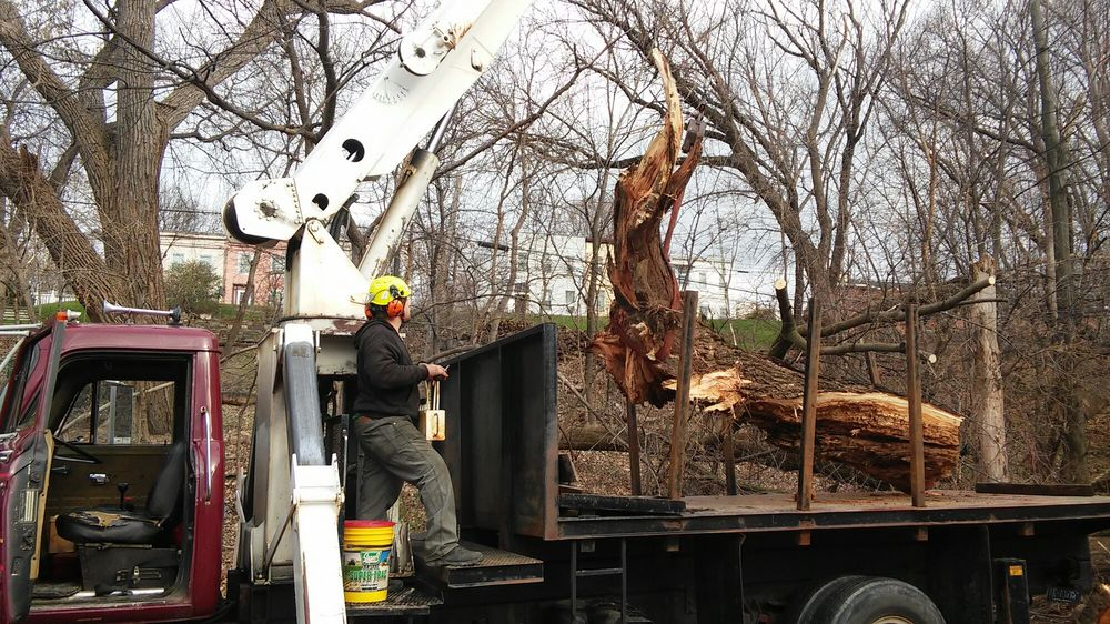 Ben's Tree Service: Castleton-On-Hudson, NY