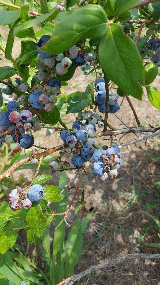 Berry Patch Farm: 62785 280th St, Nevada, IA