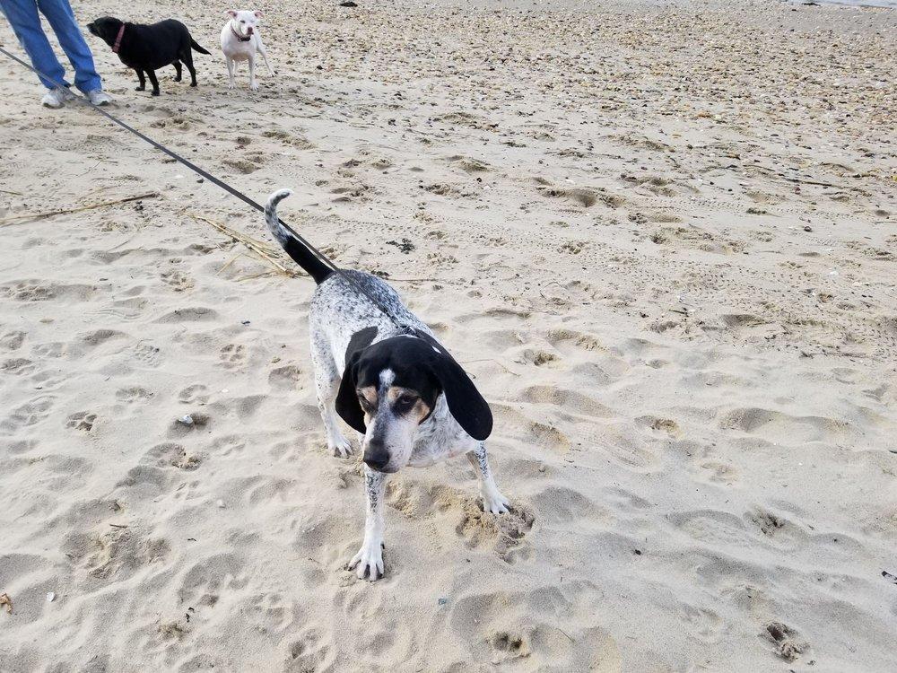 Port Jeff Dog Beach
