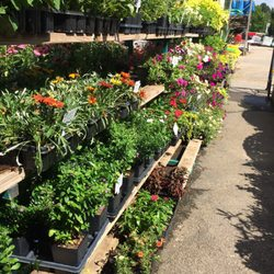 Beau Elrod Garden Center   2019 All You Need To Know BEFORE You ...