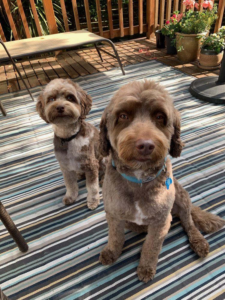 Om Doggies Gentle Mobile Grooming: Mercer Island, WA