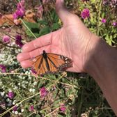 Bon Photo Of Butterfly Farms   Encinitas, CA, United States