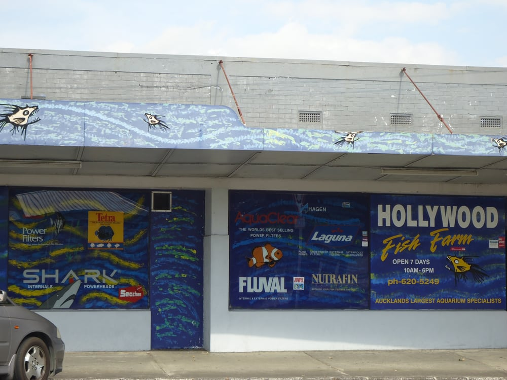 Hollywood fish farm hobby shops 36 frost rd mt for Fish farm near me